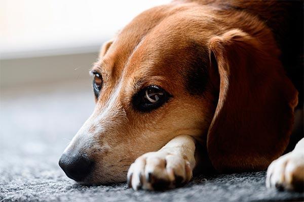 el congreso aprueba la iniciativa de ciudadanos para aumentar las penas por abandono y maltrato animal