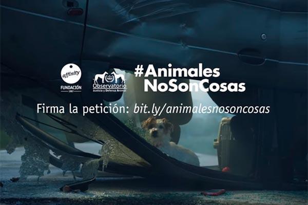fundacin affinity hace un llamamiento para rescatar a los animales implicados en un accidente