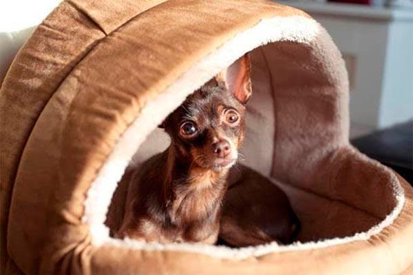 pets butler lujo slow ahora para mascotas