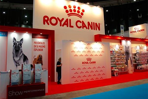 royal canin aconsejanbspsobre nutricin para gatitos y cachorros en 100x100 mascotas