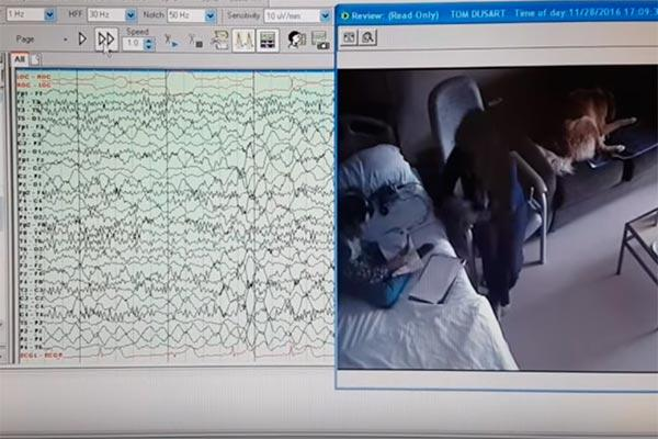la universidad de alicante sigue trabajando en su proyecto de perros que detectan ataques epilepticos