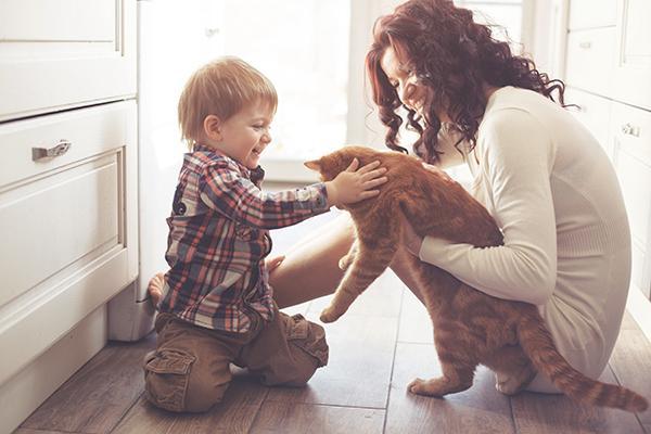 consejos para introducir un gato nuevo en casa