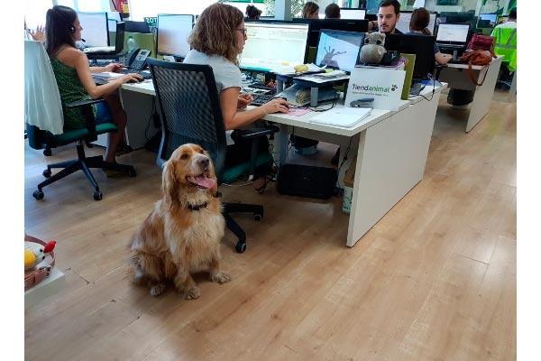 el da mundial de llevar al perro al trabajo se implanta poco a poco en espaa
