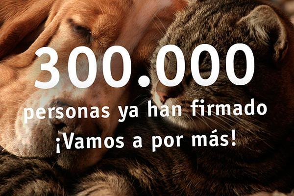 la campana animalesnosoncosas ya cuenta con mas de 300000 firmas