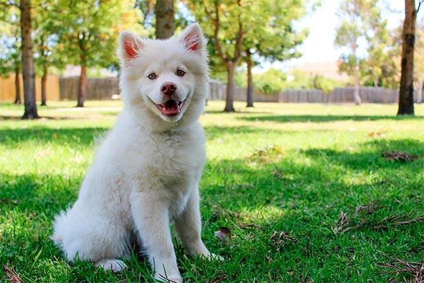 los consejos de la rsce para el cuidado de los perros en la poca estival
