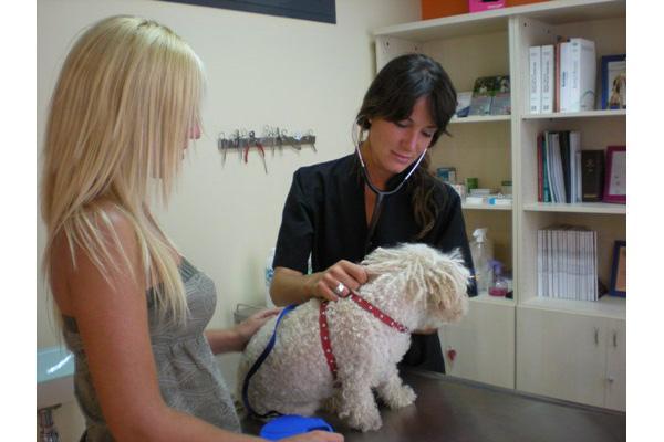 debemos demostrar el valor de la profesin veterinaria mediante la especializacin