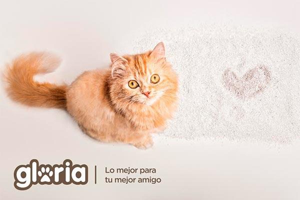 descubre las claves para cuidar a tu gato durante la estacin estival