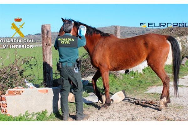 guardia civil y europol desmantelan una red que comerciaba con carne de caballo no apta para el consumo