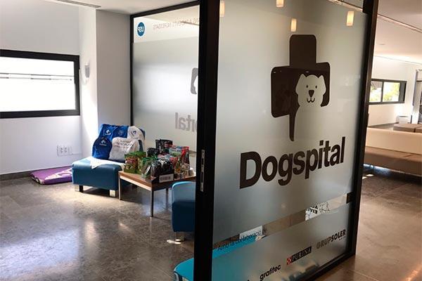 el hospital can misses acoge dogspital una iniciativa para las visitas de perros a pacientes ingresados