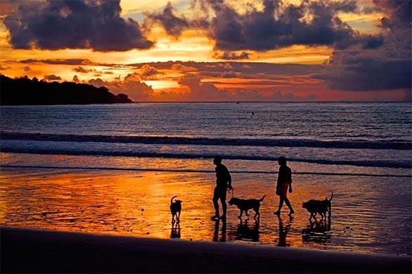 como viajar en verano con tu perro