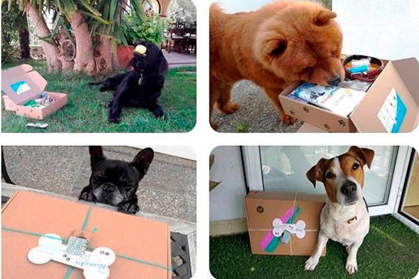 llega central de mascotas el primer buscador especializado en residencias para mascotas en espana