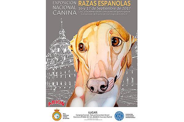cerca de 300 perros participan este fin de semana en la exposicion nacional canina de razas espanolas