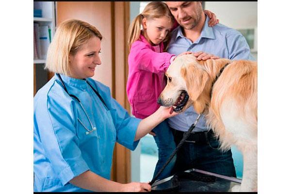 el estudio veterinaria 2030 avanza con el inicio de las encuestas