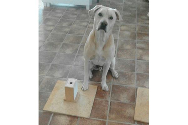 un perro entrenado puede diagnosticar cncer de pulmn