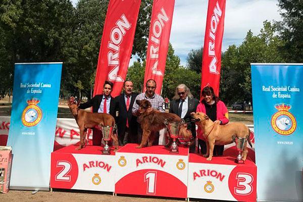 unos 300 perros de 20 razas caninas espaolas participan en la exposicin nacional canina de razas espaolas