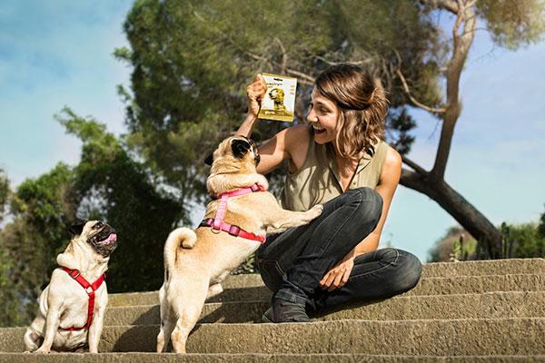 los perros padecen una enfermedad similar al alzhimer llamada sndrome de disfuncin cognitiva