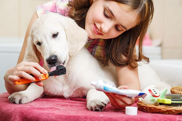 mitos sobre la higiene oral en perros
