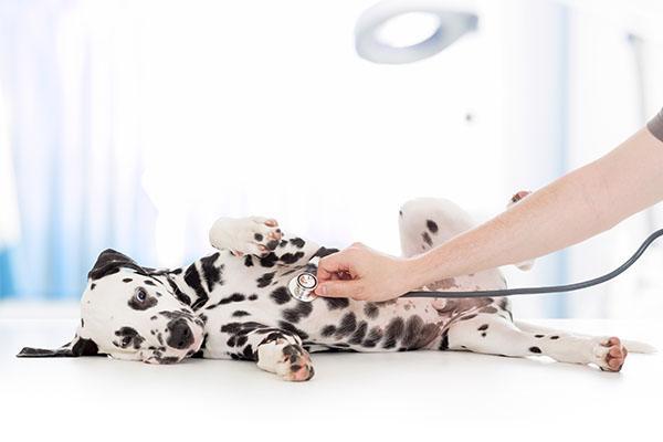 solo el 2 de las mascotas cuenta con un seguro de salud en espaa