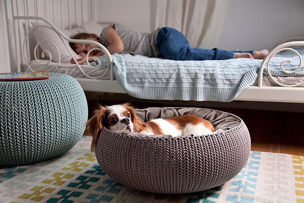 cozy pet home y cozy pet bed de curver los mejores regalos de reyes para tus mascotas