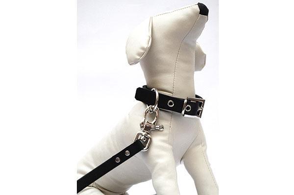 llega sampedro accesories para tu mascota