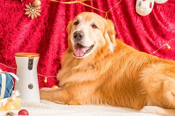 los perros tambin disfrutarn de su particular cybermonday