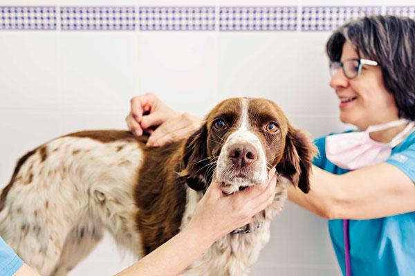 50 veterinarios de toda espaa han participado en el i concurso de fotografa mi veterinario y yo