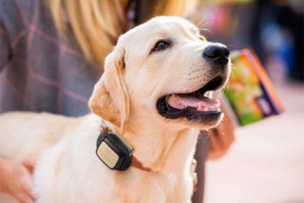 vodafone lanza un localizador para que vigiles a tu mascota