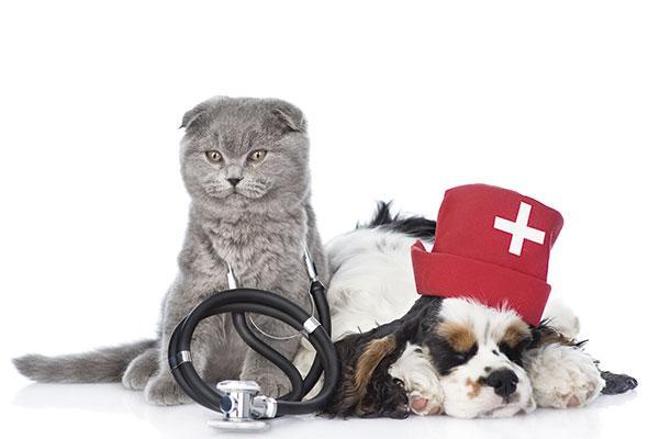 medicamento veterinario uno mas en la farmacia