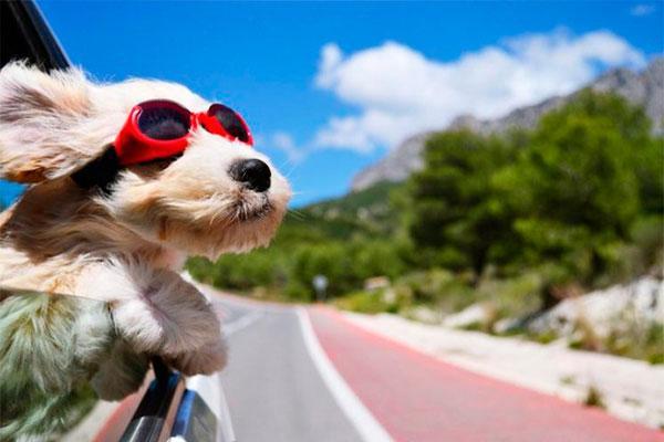 conoce los trmites necesarios para viajar con tu mascota a otro pas