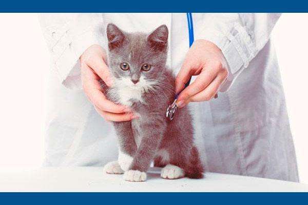 la farmacia veterinaria saca pecho en el mercado