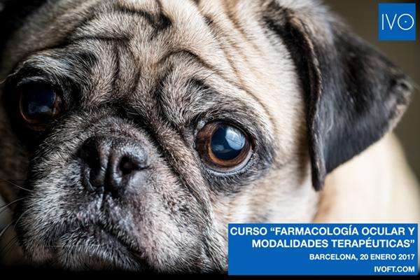 el ivonbspimparte el cursonbspfarmacologa ocular y modalidades teraputicas en oftalmologa veterinaria