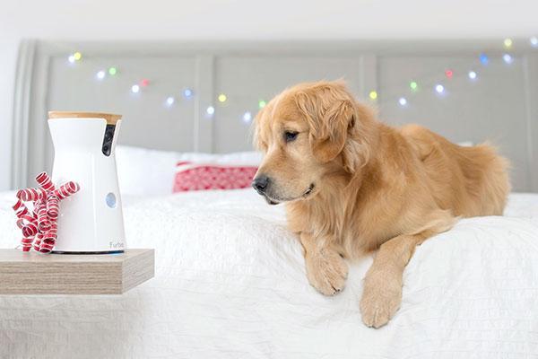 si tu perro escribiera la carta a los reyes magos pedira una cmara furbo
