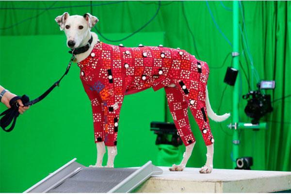 perros en busca de hogar se convierten en modelos de peliculas de animacion