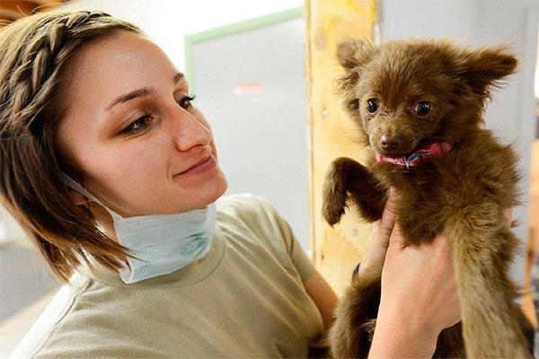 los retos de los profesionales veterinarios catalanes para 2018