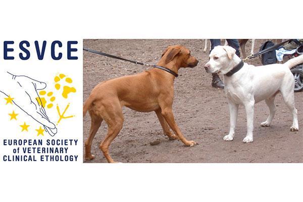 la sociedad europea de etologia clinica veterinaria dice no al uso de edispositivos de adiestramiento canino