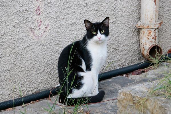 caros en gatos eficacia del tratamiento frente a cheyletiellosis felina