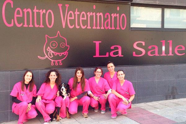 hemos incorporado un servicio de fisioterapia y rehabilitacion veterinarianbsppionero en salamanca