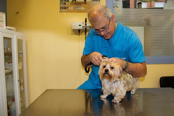 muchos veterinarios tiran precios con tal de conseguir ms clientes