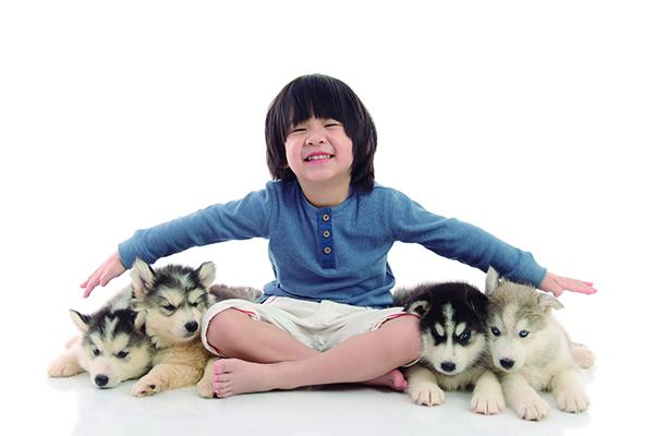 seguros para mascotas una tendencia al alza