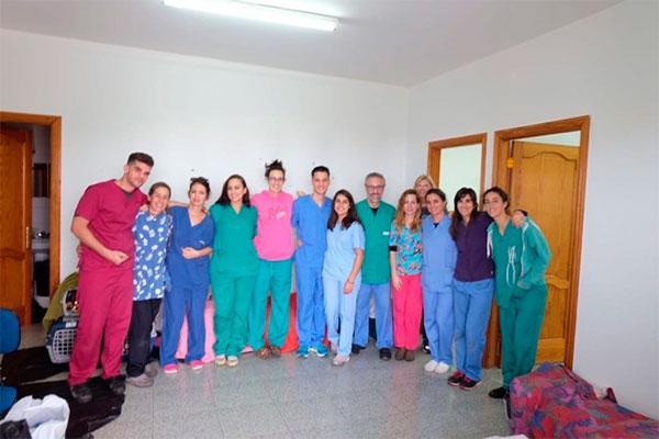 veterinarios voluntarios esterilizan 50 gatos de manera exitosa en santa brigida