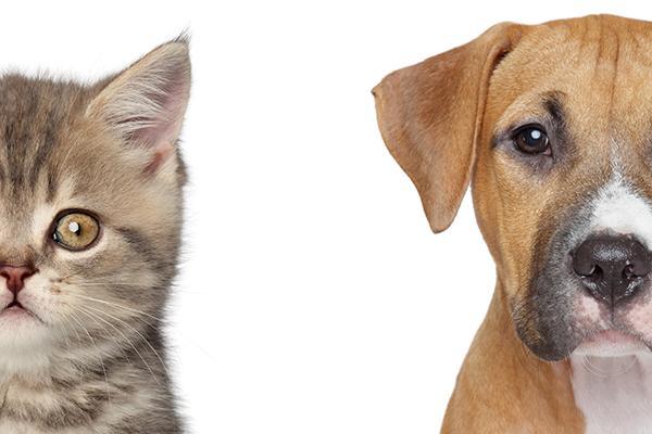waggle creado para facilitar la vida a los propietarios de mascotas