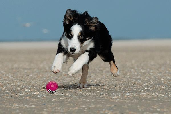 el auge de la fisioterapia veterinaria