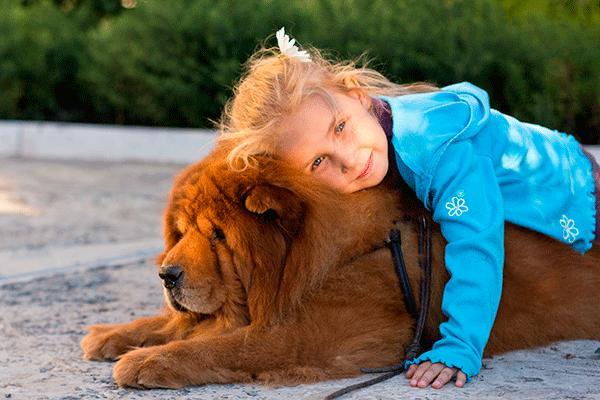 nace famasfest el primer festival para familias y mascotas