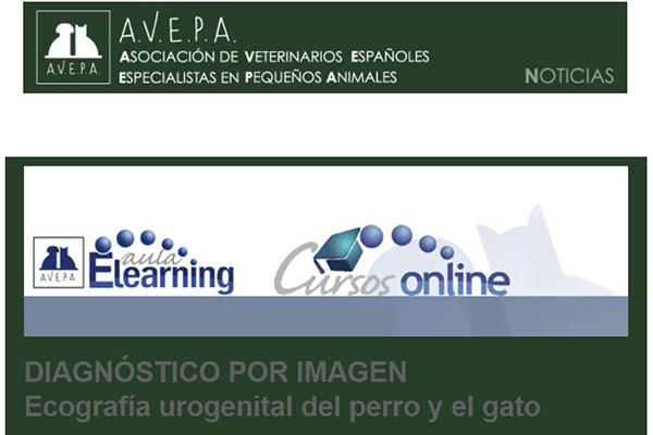 ecografa urogenital del perro y el gato nuevo curso online de avepa