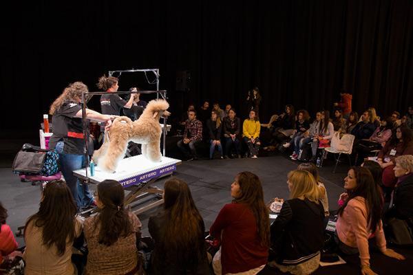 pasarela boutique el desfile profesional de moda para mascotas