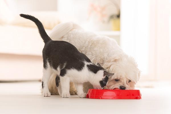 aevet expone las causas de la adquisicion de mascotas