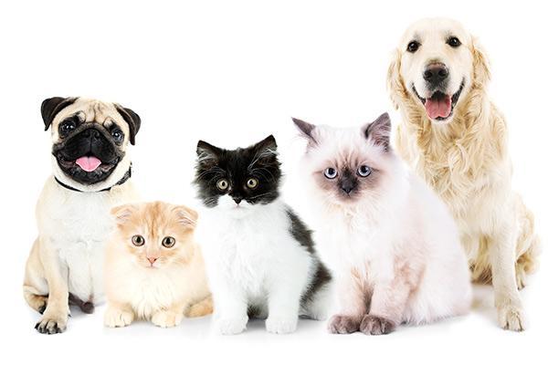 en que consiste la medicina preventiva veterinaria