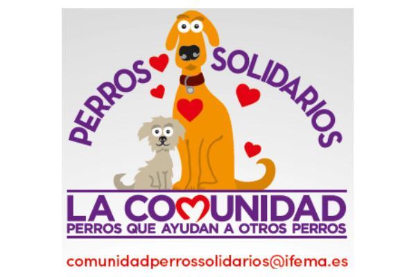 nace la comunidad perros solidarios de la mano de 100x100 mascota