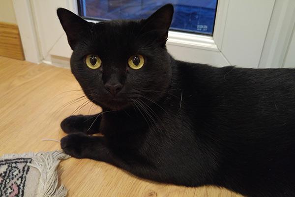 anisocoria en gatos posible indicador de un problema mas grave