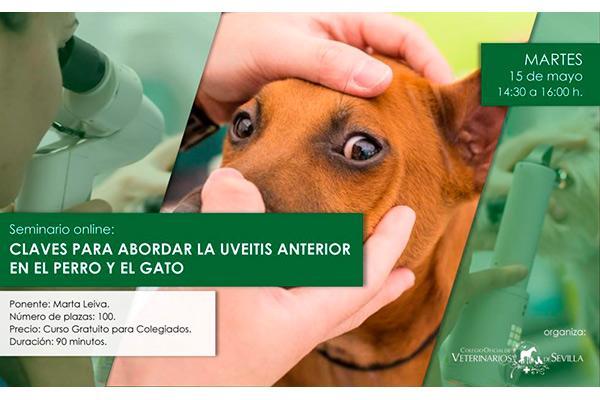 el colegio de veterinarios de sevilla organiza un webseminar sobre uveitis